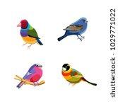 set of small bright birds....   Shutterstock .eps vector #1029771022