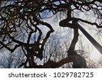 tribute to van gogh  allegory... | Shutterstock . vector #1029782725