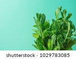 bunch of fresh organic mint on...   Shutterstock . vector #1029783085