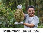 asian man farmer holding durian ... | Shutterstock . vector #1029813952