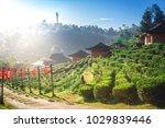lee wine ban rak thai with... | Shutterstock . vector #1029839446