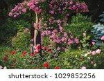 beautiful girl on a walk among... | Shutterstock . vector #1029852256