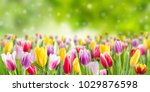 Tulip Flowers Meadow  Selectiv...