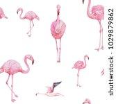 flamingo seamless pattern  ... | Shutterstock . vector #1029879862