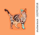 colorful cute cat. vector... | Shutterstock .eps vector #1029923518