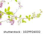 lagerstroemia floribunda flower ... | Shutterstock . vector #1029926032