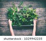 small spice herb garden rustic... | Shutterstock . vector #1029942235