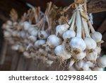 garlic in bundles dried under... | Shutterstock . vector #1029988405