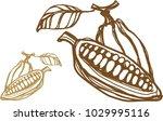 illustration of a cocoa bean...