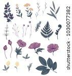 field flowers  wild plants and... | Shutterstock . vector #1030077382