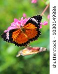 Stock photo a black orange butterfly on the flower 1030149886