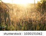 grass with sun light in the... | Shutterstock . vector #1030151062
