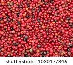 healthy cranberry background. | Shutterstock . vector #1030177846