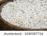 white silk cocoons in rattan... | Shutterstock . vector #1030207726
