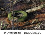 Old Green Tire Floating In The...