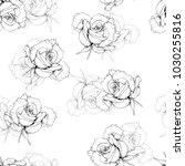 sketch roses illustration...   Shutterstock . vector #1030255816