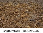 Horse Manure With Straw Beddin...