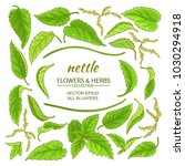 nettle elements set | Shutterstock .eps vector #1030294918