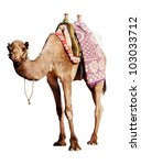 a happy  grinning camel... | Shutterstock . vector #103033712