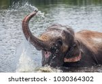 Asian Elephant Playing Water - Fine Art prints