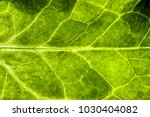 fresh green leaf rugged... | Shutterstock . vector #1030404082