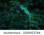 resplendent quetzal flying ... | Shutterstock . vector #1030422766