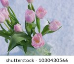 pink tulip in glass of water on ... | Shutterstock . vector #1030430566