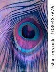 abstract macro peacock feather  ... | Shutterstock . vector #1030437676