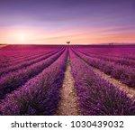 lavender flowers blooming field ...   Shutterstock . vector #1030439032