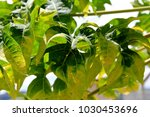 green leafs   background | Shutterstock . vector #1030453696