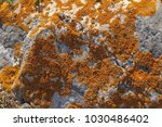 yellow moss on stone | Shutterstock . vector #1030486402