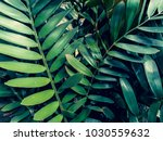 tropical jungle foliage dark... | Shutterstock . vector #1030559632