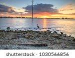 tall great blue heron ardea...   Shutterstock . vector #1030566856