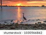 tall great blue heron ardea...   Shutterstock . vector #1030566862