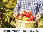 man holding a basket with ripe... | Shutterstock . vector #1030587652
