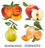 vector set of fruits  apples ... | Shutterstock .eps vector #103064252