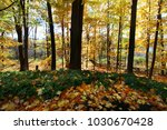 autumn trees with yellow ... | Shutterstock . vector #1030670428