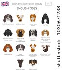 dogs by country of origin.... | Shutterstock .eps vector #1030671238