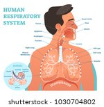 human respiratory system... | Shutterstock .eps vector #1030704802
