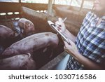 veterinarian working on check... | Shutterstock . vector #1030716586