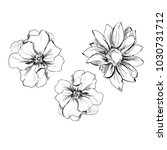 hand drawn flower  element of... | Shutterstock . vector #1030731712