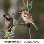 sparrow | Shutterstock . vector #103074842