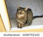 cat feline animal | Shutterstock . vector #1030752142