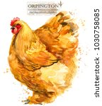 Orpington Hen. Poultry Farming...