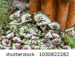 white  green and  purple leaves ... | Shutterstock . vector #1030822282