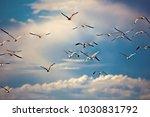 Seagulls In Sky  Summer Light...