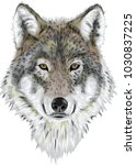 realistic vector wolf | Shutterstock .eps vector #1030837225