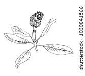 artichoke hand drawn vector... | Shutterstock .eps vector #1030841566