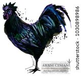 ayam cemani rooster. poultry... | Shutterstock . vector #1030898986