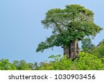 lone baobab tree against the... | Shutterstock . vector #1030903456